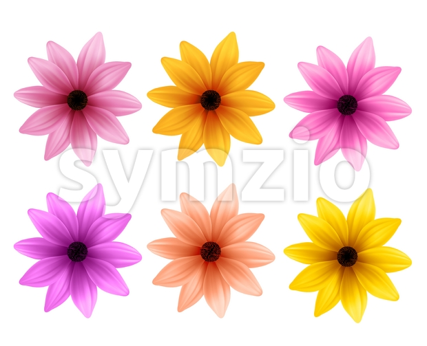 Set of Vector Flowers of Colorful Daisy for Spring Stock Vector