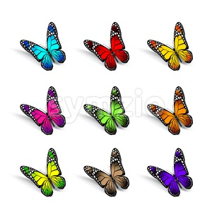 Set of Vector Colorful Butterflies Isolated Stock Vector
