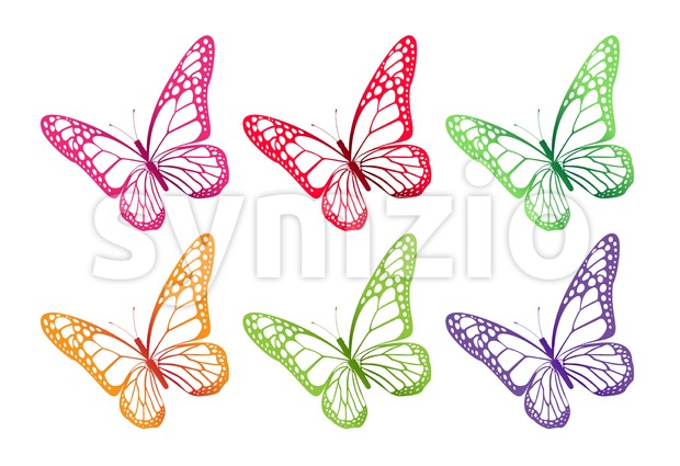 Set of Vector Colorful Butterflies Isolated in White Background for Spring Elements Vector Illustration. This vector butterflies was designed with rich in details ...