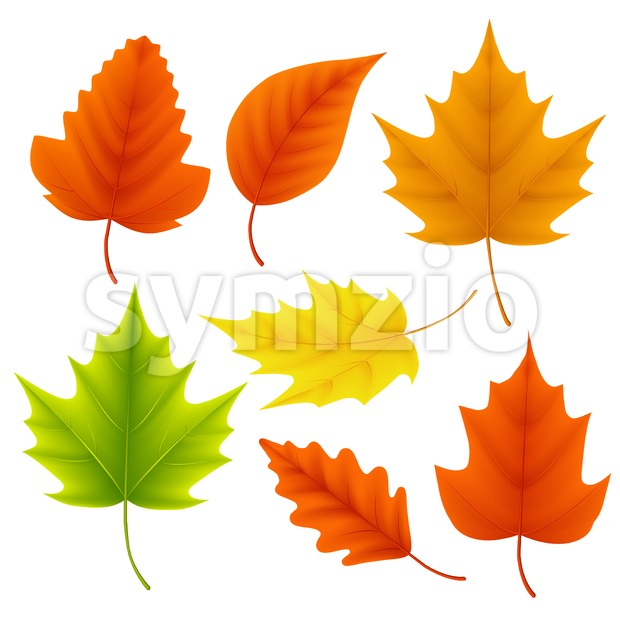 Fall leaves vector set for autumn season and seasonal elements with maple and oak leaf in different colors in white ...