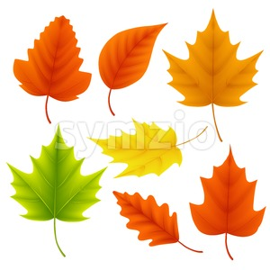 Fall Leaves Vector Set for Autumn Season and Elements Stock Vector
