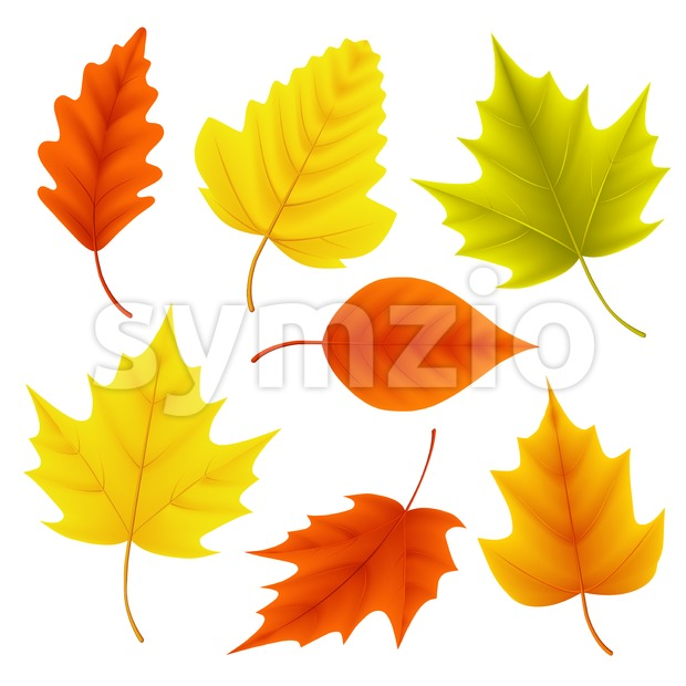 Autumn Leaves Vector Set for Fall Seasonal Elements Stock Vector