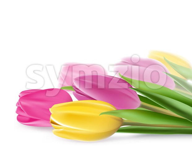 Realistic Vector Colorful Tulips Stock Vector
