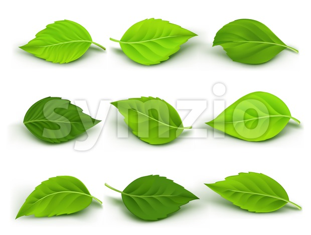 Set of Realistic Green Leaves Vector Collection Stock Vector