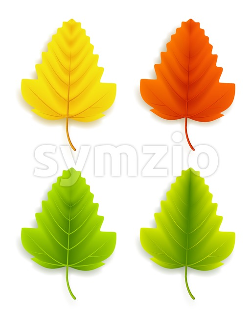 Set of Realistic Colorful Autumn Leaves Vector Stock Vector