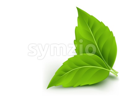 Realistic Fresh Leaves Vector for Spring Stock Vector