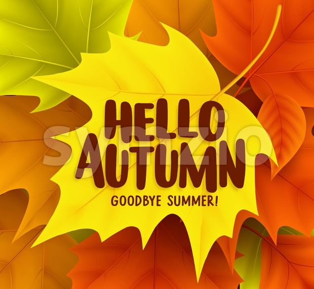 Hello autumn greetings vector design with yellow maple leaf and a background of colorful fall season leaves. Vector illustration. This ...
