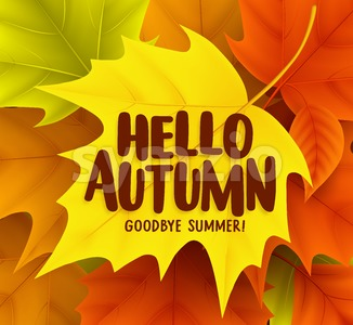 Hello Autumn Greetings Vector Design with Yellow Maple Stock Vector