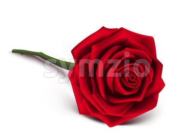 Red Rose Vector Illustration for Valentines Stock Vector