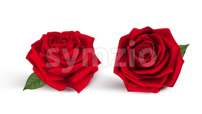 Two Realistic Vector Red Roses Isolated Stock Vector